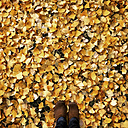 Feet in autumn leaves - LVF004191