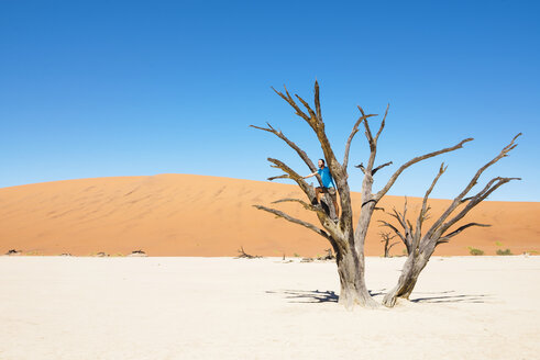 Namibia, Namib Desert, man on dead tree in Deadvlei - GEMF000522