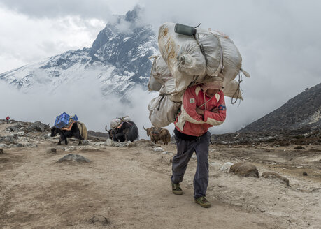 Nepal, Himalaya, Khumbu, Dughla, carrier and yaks with luggage - ALR000174