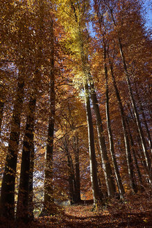 Germany, Bavaria, trees in autumn - TMF000080