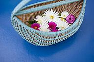 Wickerbasket of flower heads of dahlia - GISF000186