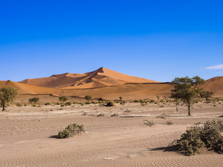 Namibia, Hardap, Naukluft Park, view to dunes of Namib Desert with camel thorns in the foreground - AMF004506