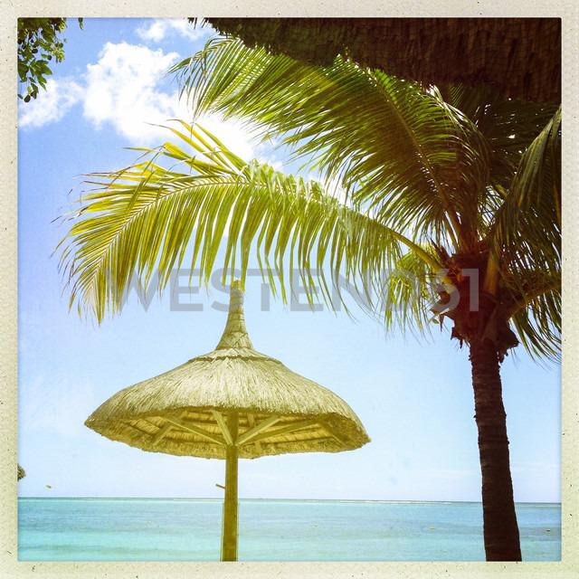Mauritius, palm beach - JUNF000479