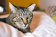 Portrait of tabby cat lying on bed - GEMF000526