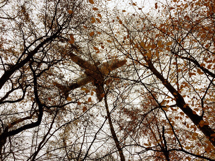 plane flying over autumn trees, Gemany, Hamburg - BMA000083