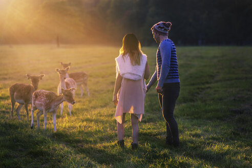 Couple with deers on a meadow at sunset - BOYF000004