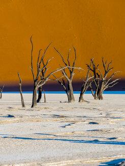 Namibia, Naukluft Park, Namib Desert, Dead Vlei, dead camel thorns in front of dune - AMF004533