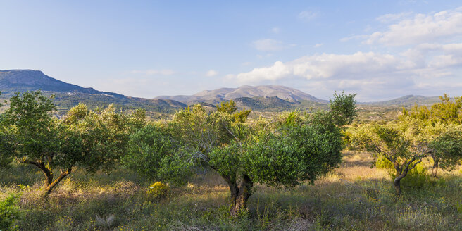 Greece, Dodecanese, Rhodes, View of Ataviros mountain, olive orchard - WDF003459