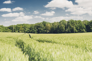 Germany, Saxony, barley field - MJF001680