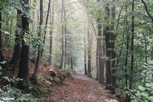 Germany, Saxony, trail in forest - MJF001683