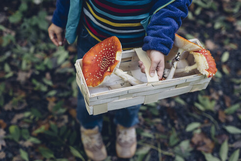 Germany, Saxony, boy holding basket with fly agarics - MJF001689