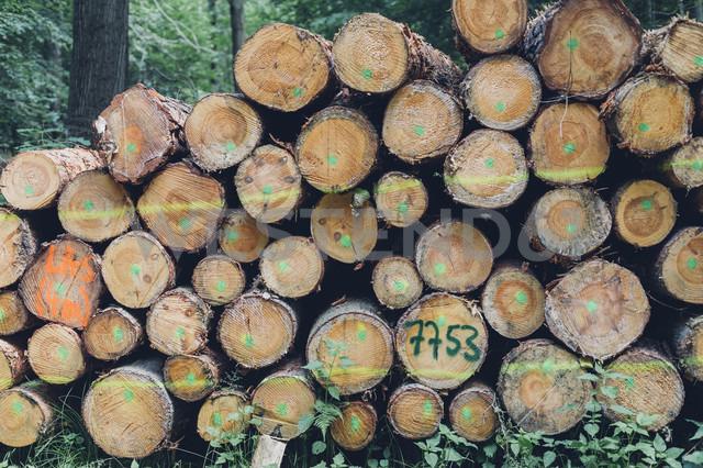 Germany, Saxony, stack of logs in forest - MJF001692 - Jana Mänz/Westend61