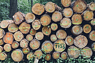 Germany, Saxony, stack of logs in forest - MJF001692