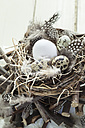 White egg and quail eggs in rustic nest - SBDF002544