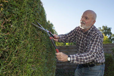 Senior man pruning hedge - WIF003014