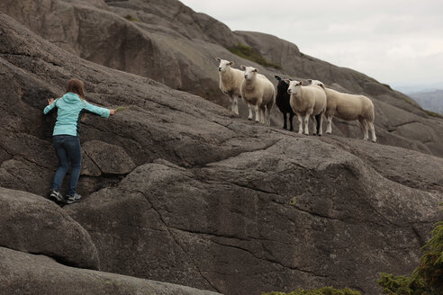 Norway, Rogaland, girl feeding sheep on rock face - TMF000083