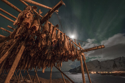 Norway, Lofoten, Hamnoy Island, Stockfish - LOMF000126