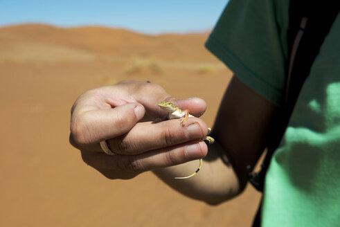 Namibia, Namib Desert, Sossusvlei, Man holding a lizard with hands - GEMF000567