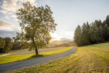 Austria, Carinthia, Ludmannsdorf, country road, forest in autumn, against the sun - DAWF000366