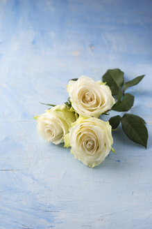 Three white roses on light blue ground - MYF001282