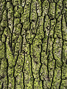 Old mossy tree trunk - EJWF000765
