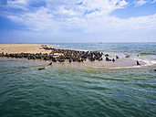 Namibia, Walvis Bay, cape fur seals lying on sandy beach - AMF004614