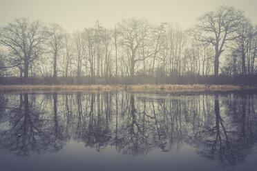Germany, Brandenburg, Lake Selchow in fog - ASCF000425