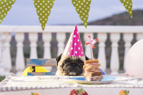Pug wearing party hat at table with sandwich - SIPF000002