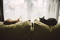 Back view of two cats sleeping on the backrest of a couch in front of a window - RAEF000765