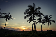 USA, Florida, Captiva Island, palm trees at sunset - CHPF000173