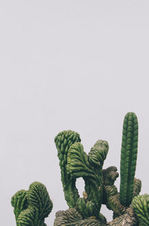 Cactus on a white background - GEMF000619