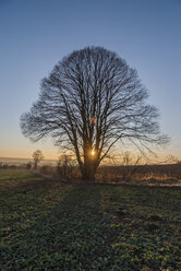 Tree in the evening - PVCF000748