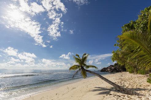 Seychelles, Praslin, Anse Kerlan, coconut palm and Cousin Island - FOF008383