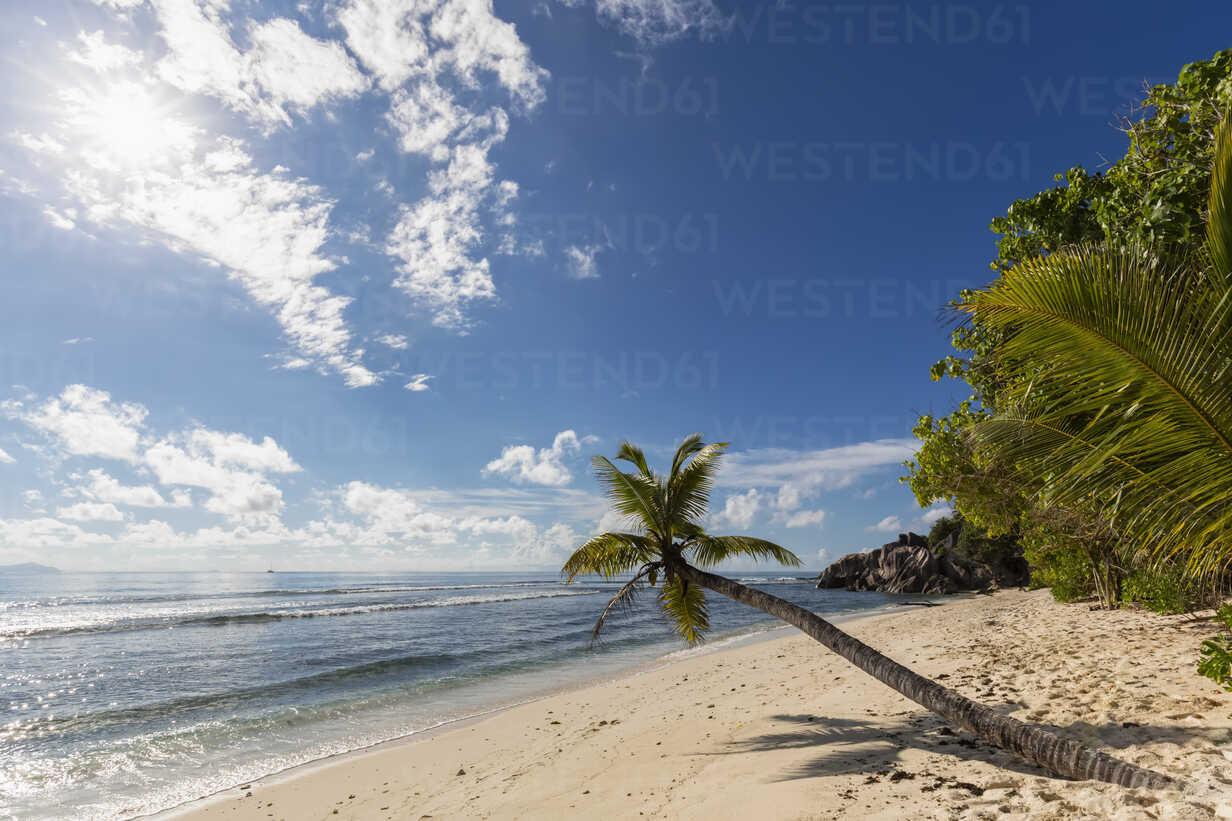 Seychelles, Praslin, Anse Kerlan, coconut palm and Cousin Island - FOF008383 - Fotofeeling/Westend61