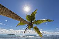 Seychelles, Praslin, Anse Kerlan, coconut palm and Cousin Island - FOF008386