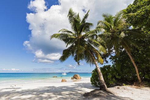 Seychelles, Praslin, Anse Lazio, catamaran, palm on beach - FOF008392