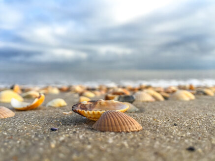 Seashells on beach - ODF001355