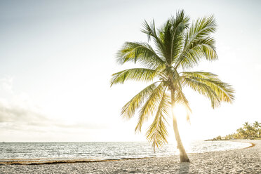 USA, Florida, Key West, palm tree on beach in backlight - CHPF000208