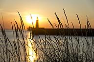 Germany, Bremerhaven, Grasses, - SJF000163