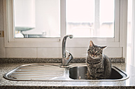 Tabby cat sitting in the kitchen sink - RAEF000812