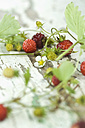 Woodland strawberries with leaves and blossom on wood - ASF005815