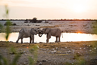 Namibia, Etosha National Park, elephants at a waterhole at sunset - GEMF000654