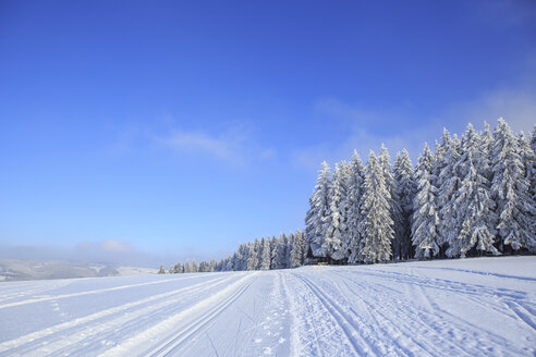 Germany, Thuringia, Wintry forest with ski tracks near Masserberg - VTF000500