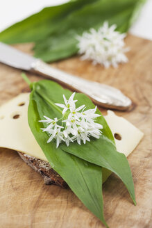 Slice of bread with cheese and fresh ramson, eatable blossom - GWF004597