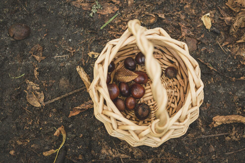 Basket with chestnuts - ASCF000488