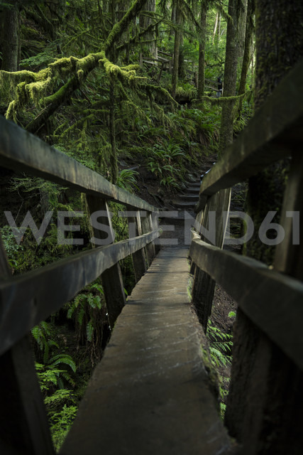 USA, Washington State, Olympic National Park, wooden foothbridge in forest - NGF000275 - Nadine Ginzel/Westend61