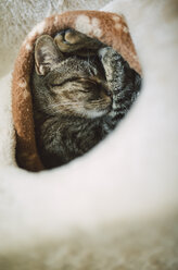Tabby cat sleeping in burrow - RAEF000860