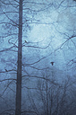 Bare trees and crows - DWIF000682