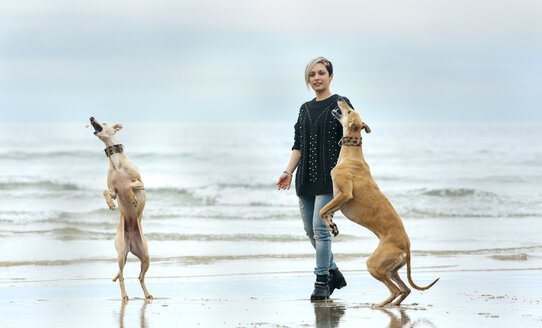 Spain, Llanes, young woman playing with her greyhounds on the beach - MGOF001371