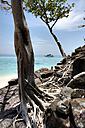 Thailand, Bamboo Island, bizarre tree roots - JATF000842